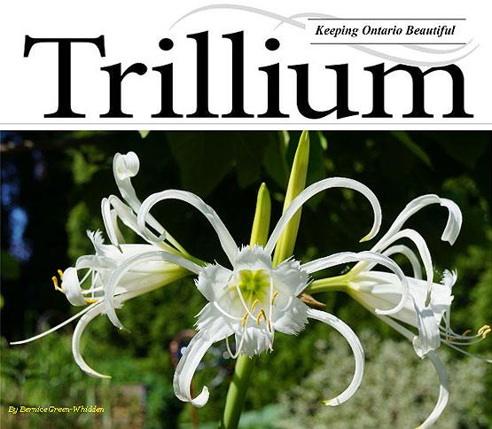 trilliium_summer_2014