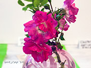 rose_show_11_small