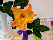 rose_show_12_small