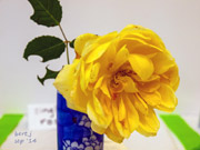 rose_show_14_small