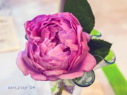 rose_show_15_small