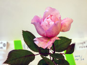 rose_show_16_small