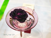 rose_show_17_small