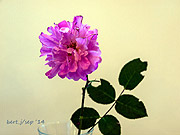 rose_show_2_small