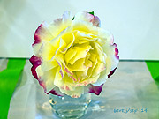 rose_show_4_small