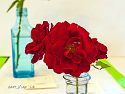 rose_show_5_small