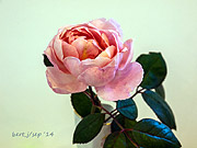 rose_show_9_small