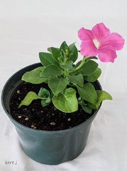 Horticulture Class - Winner